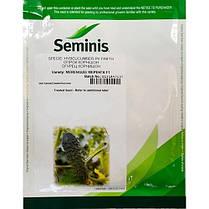 Семена огурца Меренга F1 (Seminis), 1000 семян — ультраранний гибрид (38-40 дней), партенокарпик, фото 2