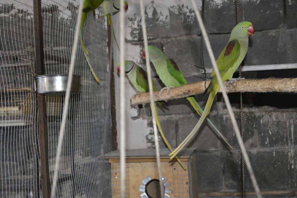 Питомник попугаев