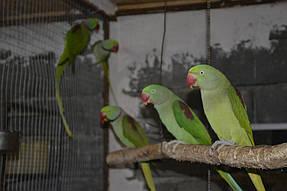Питомник попугаев 2