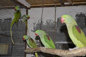 Питомник попугаев 3