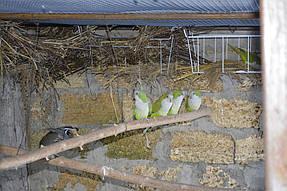 Питомник попугаев 5