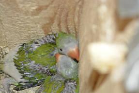 Питомник попугаев 4