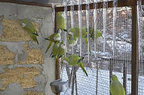 Питомник попугаев 6