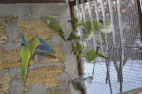 Питомник попугаев 7