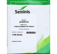 Семена огурца СВ 4097 КВ F1 / SV 4097 CV F1 (Seminis) 1000 семян - партенокарпик, ультра-ранний (40-45 дней)