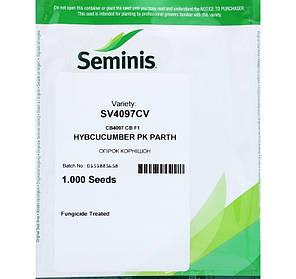 Семена огурца СВ 4097 КВ F1 / SV 4097 CV F1 (Seminis), 1000 семян — ультраранний (40-45 дней), партенокарпик, фото 2
