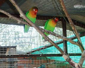 Питомник попугаев 9