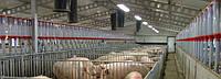 Оборудование для свиноводства, оборудование для свиноферм