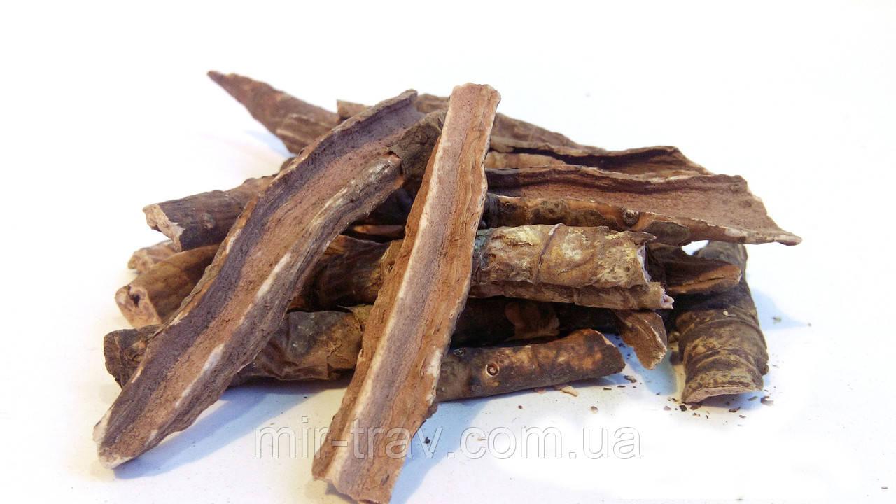 Бадан толстолистный (камнеломка толстолистная, монгольский чай)
