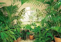 Фотообои Вид из окна Зимний сад №231 366x254см (Клей в комплекте) W+G