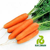 Семена моркови Рига F1 (Riga F1) 25000 (кал. 1.4-1.6 ) семян Rijk Zwaan