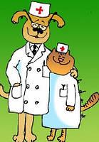 Первичный клинический осмотр животного