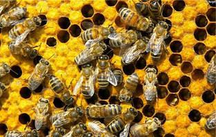 Целебные продукты пчеловодства
