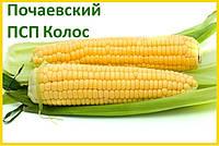 Гибрид кукурузы Почаевский 190 МВ (ФАО 190) - ПСП Колос