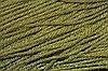 Канат декоративный 6мм люрекс (100м) золото