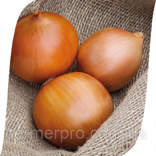 Семена лука Замбези F1 \ Zambezi F1 250.000 семян Seminis