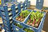 Семена буряка столового Водан F1/Wodan F1 (10 000 сем.), Bejo, Нидерланды