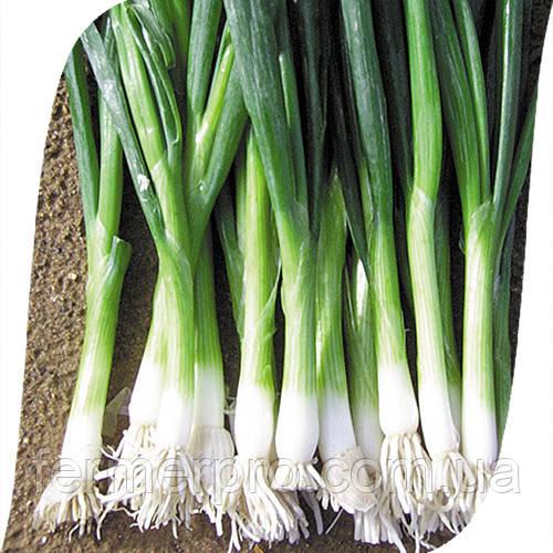 Семена Лука на перо Бая Верде \ Baja Verde  250 000 семян Seminis