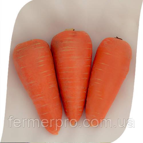 Семена моркови SV 3118 DH F1  1млн семян (1.6 -1.8 мм) Seminis
