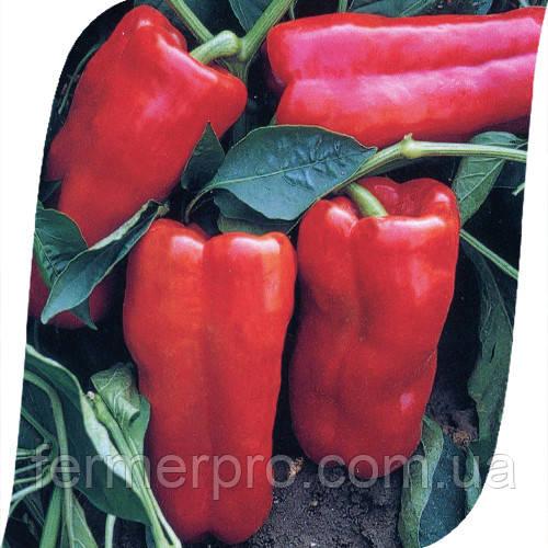Семена перца Фавилла F1 \ Favilla F1 500 семян Seminis