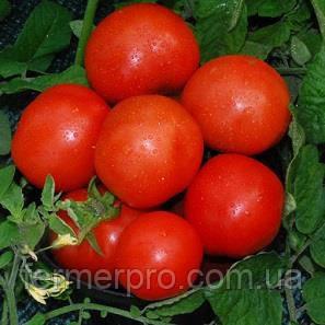 Семена томата  Ферст F1 \ First F1 1000 семян Seminis