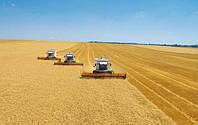 Экспорт агропродукцию в РФ упал на 70%