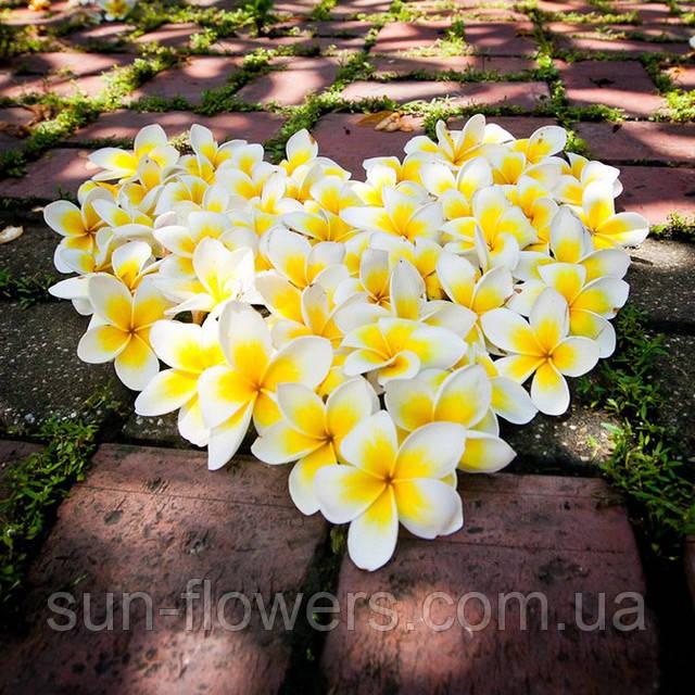 Цветок Будды - плюмерия.