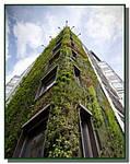 Вертикальные клумбы своими руками, или как сделать висячие сады?(интересные статьи)