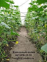 Капельный полив Грядка 50 для огорода, теплицы, сада.