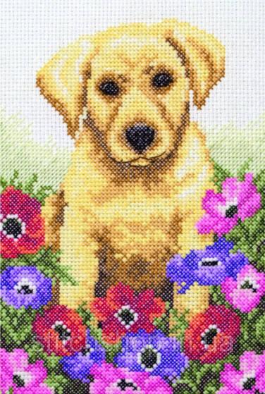"""PCE759  """"Щенок (Puppy)"""" ANCHOR. Набор для вышивания нитками"""