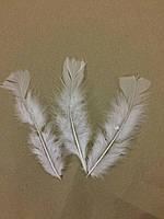 Перья  белые 10-13 см.