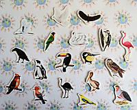 Птицы. Магнитики развивающие. Набор