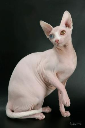 Нежелательная беременность у кошек