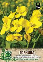 Семена Горчицы (1 кг)