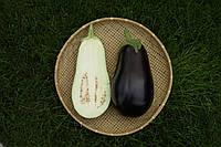 Баклажан Эпик F1 Seminis 1000 семян, фото 1