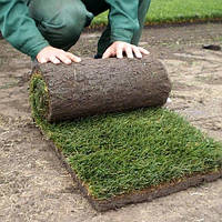 Устройство рулонного и посевного газона