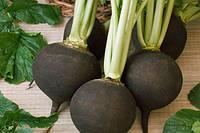 Семена редьки Черная-зимняя