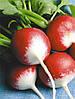 Семена Редис Красный с белым кончиком 3 грамма PNOS