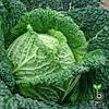 Семена савойской капусты Вироса F1 / Wirosa F1 - 2500 семян