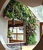 Фитостена из живых растений. Вертикальное озеленение.