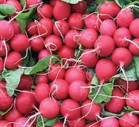 Семена редиса Дабел F1 (10 000 семян)