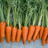 Семена моркови 3-Комет (500 гр) ранняя типа Шантане, фото 1
