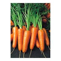 Семена Моркови Карини (50 г) Bejo Zaden