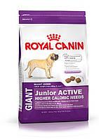 Royal Canin Giant Junior Active - корм для очень крупных щенков с высокими энергетическими потребностями 15кг, фото 1