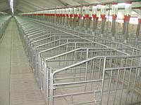 Организация фермы крс