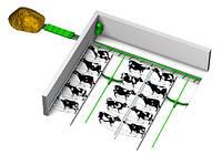 Механизация удаления навоза фермах крс