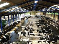Откормочная ферма крс