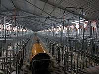 Строительство фермы крс цена