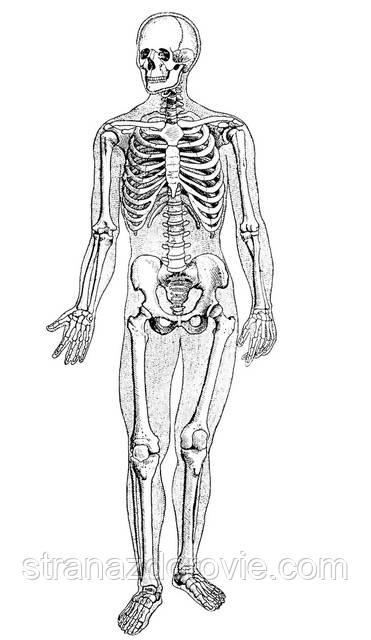 Что делать, чтоб не болели суставы и кости?