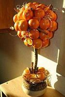 Мандариновое дерево-топиарий